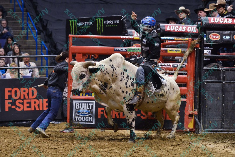 Rider MIKE LEE on bull JOHNNY WALKER BLACK JR. during the first round at the Professional Bull Riders Built Ford Tough Series, Bass Pro Chute Out presented by Cooper Tires at the Scottrade Center in St. Louis, Missouri