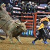 bull TAHONTA'S MAGIC chases Bullfighter FRANK NEWSOM (orange) during the third round at the Professional Bull Riders Built Ford Tough Series, Bass Pro Chute Out presented by Cooper Tires at the Scottrade Center in St. Louis, Missouri