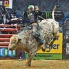Rider GAGE GAY has a successful ride on bull MAC-NETT'S SOUTHERN WINE during the final round at the Professional Bull Riders Built Ford Tough Series, Bass Pro Chute Out presented by Cooper Tires at the Scottrade Center in St. Louis, Missouri