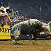 Rider DAVE MASON gets bucked from bull THE PUNISHER during the second round at the Professional Bull Riders Built Ford Tough Series, Bass Pro Chute Out presented by Cooper Tires at the Scottrade Center in St. Louis, Missouri
