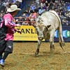 Bullfighter FRANK NEWSOM (orange) gets chased by bull RECTIFY during the second round at the Professional Bull Riders Built Ford Tough Series presented by Cooper Tires at the Scottrade Center in St. Louis, Missouri