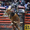 Rider AUSTIN MEIER  on bull SHANGHAI HEAT during the final round at the Professional Bull Riders Built Ford Tough Series, Bass Pro Chute Out presented by Cooper Tires at the Scottrade Center in St. Louis, Missouri