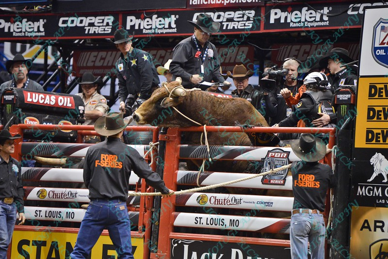 bull OFF THE GRID tries to climb out of the chute during the third round at the Professional Bull Riders Built Ford Tough Series, Bass Pro Chute Out presented by Cooper Tires at the Scottrade Center in St. Louis, Missouri