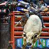 Rider KAIQUE PACHECO leans but stays on bull WHO DEY to take the championship during the championship round at the Professional Bull Riders Built Ford Tough Series, Bass Pro Chute Out presented by Cooper Tires at the Scottrade Center in St. Louis, Missouri