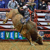 Rider STETSON LAWRENCE with bull PERCOLATOR during the third round at the Professional Bull Riders Built Ford Tough Series, Bass Pro Chute Out presented by Cooper Tires at the Scottrade Center in St. Louis, Missouri
