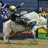 Rider Matt Triplett on bull RECTIFY during the third round at the Professional Bull Riders Built Ford Tough Series, Bass Pro Chute Out presented by Cooper Tires at the Scottrade Center in St. Louis, Missouri