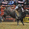 Rider BEN JONES  on bull BLUEGRASS during the third round at the Professional Bull Riders Built Ford Tough Series, Bass Pro Chute Out presented by Cooper Tires at the Scottrade Center in St. Louis, Missouri