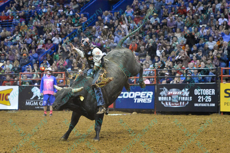Rider CHASE OUTLAW  has a successful ride on bull CRACK THE WHIP during the second round at the Professional Bull Riders Built Ford Tough Series, Bass Pro Chute Out presented by Cooper Tires at the Scottrade Center in St. Louis, Missouri