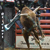 Rider GUILHERME MARCHI on bull WACEY during the third round at the Professional Bull Riders Built Ford Tough Series, Bass Pro Chute Out presented by Cooper Tires at the Scottrade Center in St. Louis, Missouri
