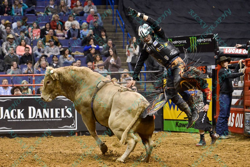 Rider STETSON LAWRENCE jumps off the back of bull GREY WOLF after completing his ride during the first round at the Professional Bull Riders Built Ford Tough Series, Chute Out presented by Cooper Tires at the Scottrade Center in St. Louis, Missouri