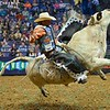Bull RIM SHOT falls on his side in an attempt to buck Rider DAVE MASON during the first round at the Professional Bull Riders Built Ford Tough Series, Chute Out presented by Cooper Tires at the Scottrade Center in St. Louis, Missouri