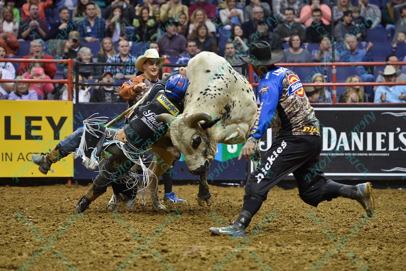 Rider MIKE LEE tries to get his hand free from the rope around bull JOHNNY WALKER BLACK JR. during the first round at the Professional Bull Riders Built Ford Tough Series, Bass Pro Chute Out presented by Cooper Tires at the Scottrade Center in St. Louis, Missouri
