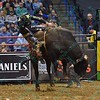 Snot flies from bull OPEN SEASON as he bucks Rider SEAN WILLINGHAM during the first round at the Professional Bull Riders Built Ford Tough Series, Chute Out presented by Cooper Tires at the Scottrade Center in St. Louis, Missouri