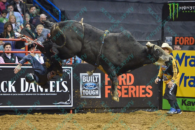 Rider KASEY HAYES  and bull PURE BULL during the third round at the Professional Bull Riders Built Ford Tough Series, Bass Pro Chute Out presented by Cooper Tires at the Scottrade Center in St. Louis, Missouri