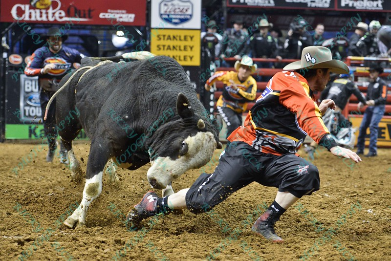 Bullfighter SHORTY GORHAM (red) runs to stay ahead of bull COMFORTABLY NUMB during the final round at the Professional Bull Riders Built Ford Tough Series, Bass Pro Chute Out presented by Cooper Tires at the Scottrade Center in St. Louis, Missouri