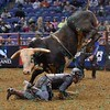 Rider REESE CATES  is bucked from bull HARD TIMES during the first round at the Professional Bull Riders Built Ford Tough Series, Bass Pro Chute Out presented by Cooper Tires at the Scottrade Center in St. Louis, Missouri
