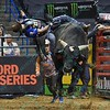 Rider EDUARDO APARECIDO  leans trying to keep on bull EIGHT BALL during the first round at the Professional Bull Riders Built Ford Tough Series, Bass Pro Chute Out presented by Cooper Tires at the Scottrade Center in St. Louis, Missouri
