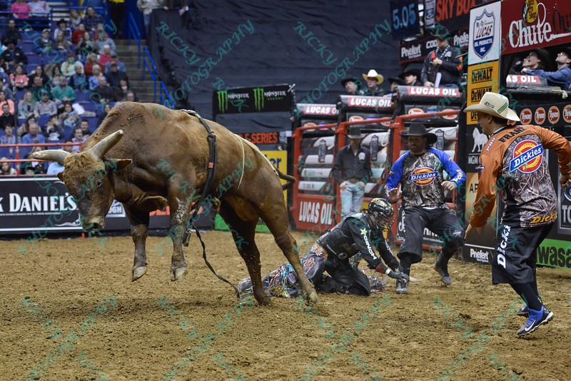 Rider SHANE PROCTOR is bucked off bull WACEY during the first round at the Professional Bull Riders Built Ford Tough Series, Bass Pro Chute Out presented by Cooper Tires at the Scottrade Center in St. Louis, Missouri