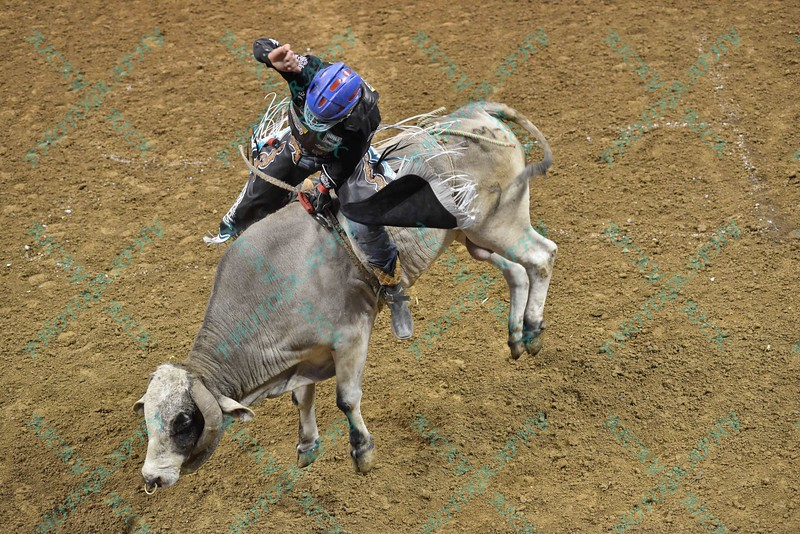 Rider MIKE LEE on bull REMEMBER WHEN during the second round at the Professional Bull Riders Built Ford Tough Series, Bass Pro Chute Out presented by Cooper Tires at the Scottrade Center in St. Louis, Missouri