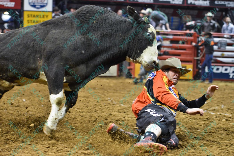 Bullfighter SHORTY GORHAM (red) slides to get away from bull COMFORTABLY NUMB during the final round at the Professional Bull Riders Built Ford Tough Series, Bass Pro Chute Out presented by Cooper Tires at the Scottrade Center in St. Louis, Missouri
