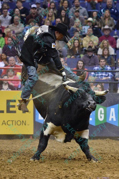 Rider MARCO EGUCHI gets bucked from bull WESLEY'S PET during the first round at the Professional Bull Riders Built Ford Tough Series, Bass Pro Chute Out presented by Cooper Tires at the Scottrade Center in St. Louis, Missouri