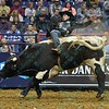 Rider MARCO EGUCHI starts to fall off of bull WESLEY'S PET during the first round at the Professional Bull Riders Built Ford Tough Series, Chute Out presented by Cooper Tires at the Scottrade Center in St. Louis, Missouri