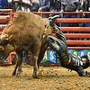 Rider EDUARDO APARECIDO  falls hard off of bull MCINTYRE TRANSPORTS BACK JACKIN during the second round at the Professional Bull Riders Built Ford Tough Series presented by Cooper Tires at the Scottrade Center in St. Louis, Missouri
