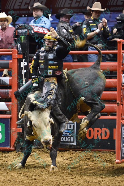 Rider Matt Triplett with bull COWBOY'S DANCE HALL'S PANDA TRAX during the third round at the Professional Bull Riders Built Ford Tough Series, Bass Pro Chute Out presented by Cooper Tires at the Scottrade Center in St. Louis, Missouri