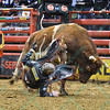 Rider AUSTIN MEIER  falls hard after being bucked by bull SHANGHAI HEAT during the final round at the Professional Bull Riders Built Ford Tough Series, Bass Pro Chute Out presented by Cooper Tires at the Scottrade Center in St. Louis, Missouri