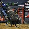 Rider EDUARDO APARECIDO  gets tossed from bull EIGHT BALL during the first round at the Professional Bull Riders Built Ford Tough Series, Bass Pro Chute Out presented by Cooper Tires at the Scottrade Center in St. Louis, Missouri