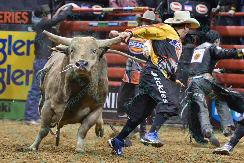 bull TAHONTA'S MAGIC chases Bullfighter FRANK NEWSOM (orange) during the final round at the Professional Bull Riders Built Ford Tough Series, Bass Pro Chute Out presented by Cooper Tires at the Scottrade Center in St. Louis, Missouri