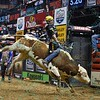 Rider SILVANO ALVES  on bull XD SPORTS DOUBLE AGENT during the first round at the Professional Bull Riders Built Ford Tough Series, Bass Pro Chute Out presented by Cooper Tires at the Scottrade Center in St. Louis, Missouri