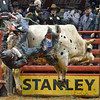 Rider ZANE LAMBERT falls off of bull FOR SALE during the second round at the Professional Bull Riders Built Ford Tough Series presented by Cooper Tires at the Scottrade Center in St. Louis, Missouri