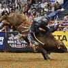 Rider TANER BYRNE starts to fall off bull COOPER TIRES BROWN SUGAR during the second round at the Professional Bull Riders Built Ford Tough Series, Bass Pro Chute Out presented by Cooper Tires at the Scottrade Center in St. Louis, Missouri
