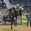 PBR 2013 - St. Louis, MO. Championship round - 021713