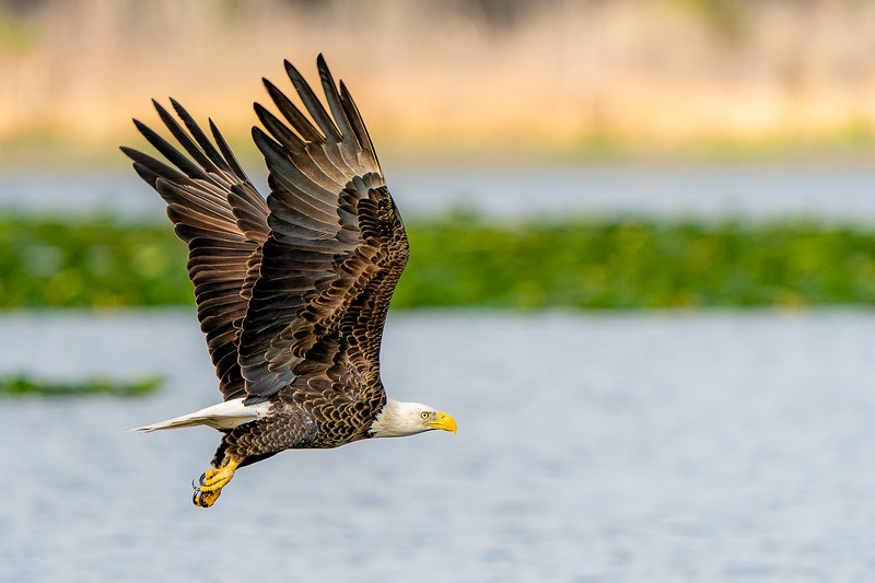 Mark, please pick ONE of these eagle action shots and tell me what I can do to improve the image and what you think of my settings.