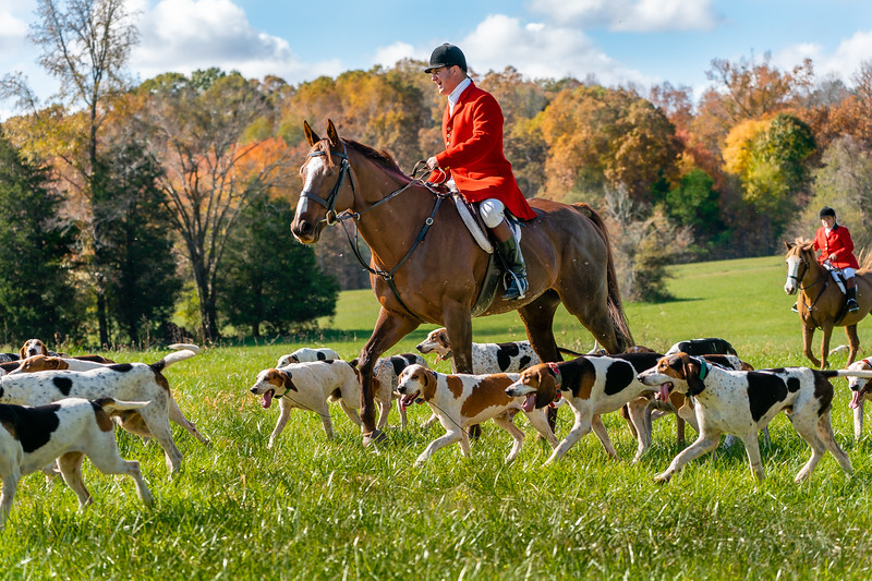 This shot was towards the end of the day and the light is now very harsh.  The hounds/horse and rider are backlit so I brought up the shadows.  I used the brush in LR to add saturation to the few fall colors in the background.
