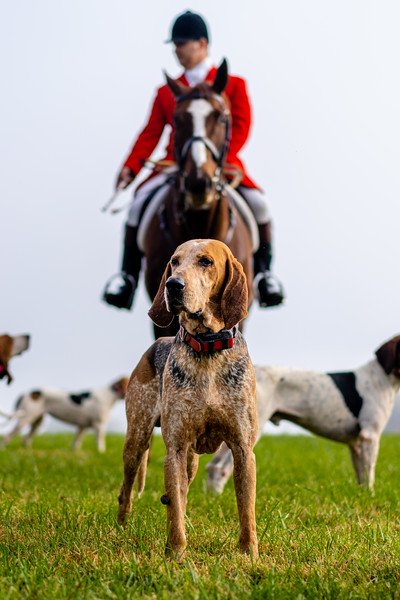 This is my favorite of the three.  I like how alert/proud the Hound appears, with his Huntsman looking over him.  I got lucky to have lined them up for this shot.