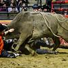 0001312020_Professional Championship Bull Riders