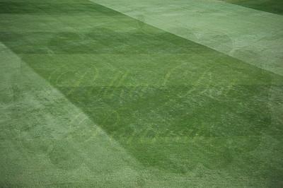 Fenway Field grass.