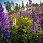 Carrie Gregory's photo