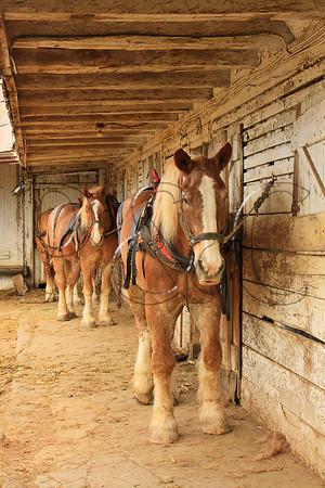 PENNSYLVANIA - SIX HORSE BELL TEAM