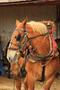 PA GREENCASTLE Charlie Lindsay SIX HORSE BELL TEAM MAYJJ_MG_1860MMW