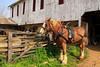 PA GREENCASTLE Charlie Lindsay SIX HORSE BELL TEAM MAYJJ_MG_1466MMW