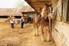 PA GREENCASTLE Charlie Lindsay SIX HORSE BELL TEAM MAYJJ_MG_1865MMW