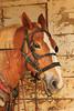 PA GREENCASTLE Charlie Lindsay SIX HORSE BELL TEAM MAYJJ_MG_1531MMW