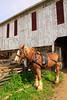 PA GREENCASTLE Charlie Lindsay SIX HORSE BELL TEAM MAYJJ_MG_1471bMMW