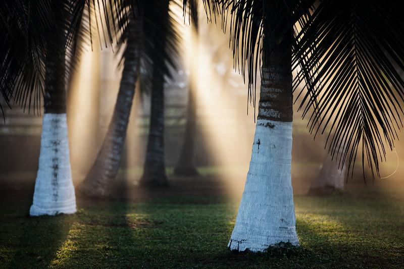 Sun beams through palm trees - San Pedro, Cote d'Ivoire
