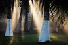 Sun beams through palm trees - San Pedro, Cote d'Ivoire