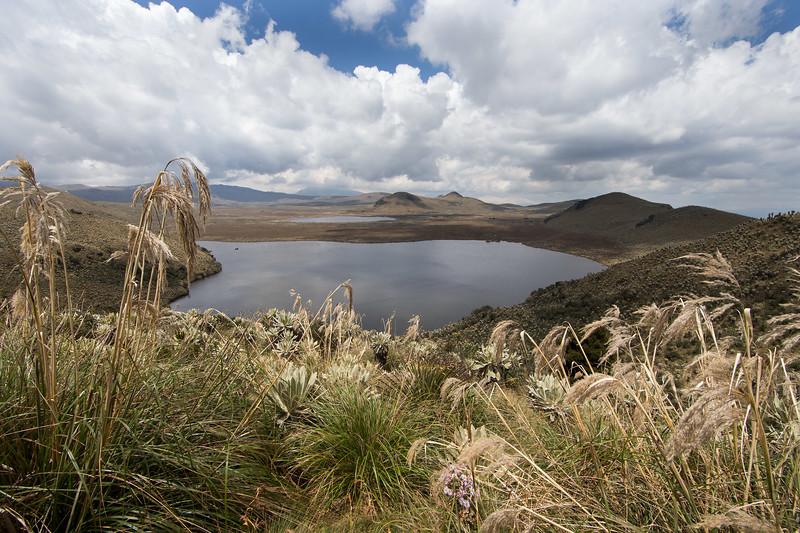 El Angel National Park, Ecuador